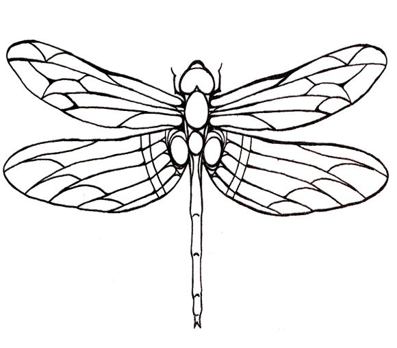 Dragonfly large winged coloring page for kids patterns for Dragonfly coloring pages