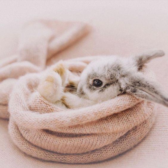 Cutest bunny #cutebunnies #cuteanimals #babybunny #coreworkouts