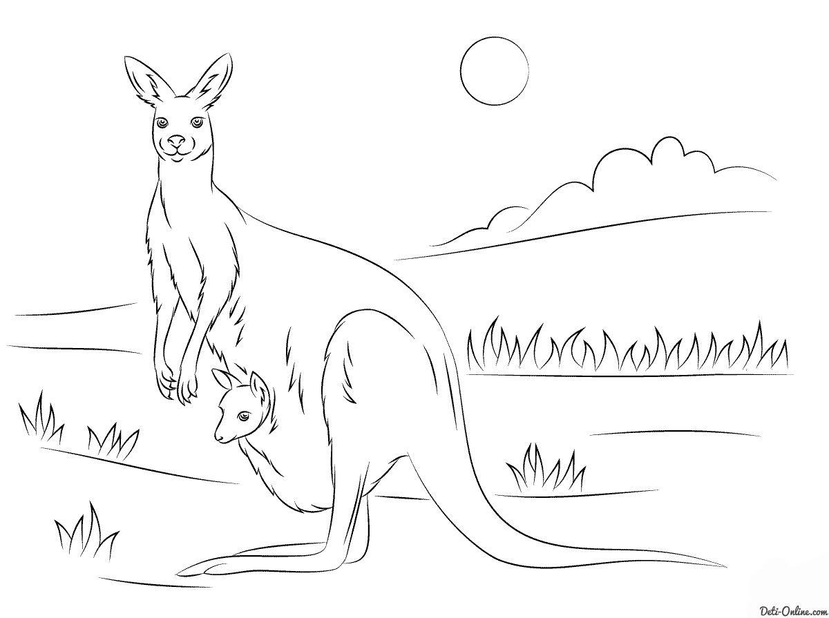 Раскраска Кенгуру с кенгурёнком распечатать или скачать с ...