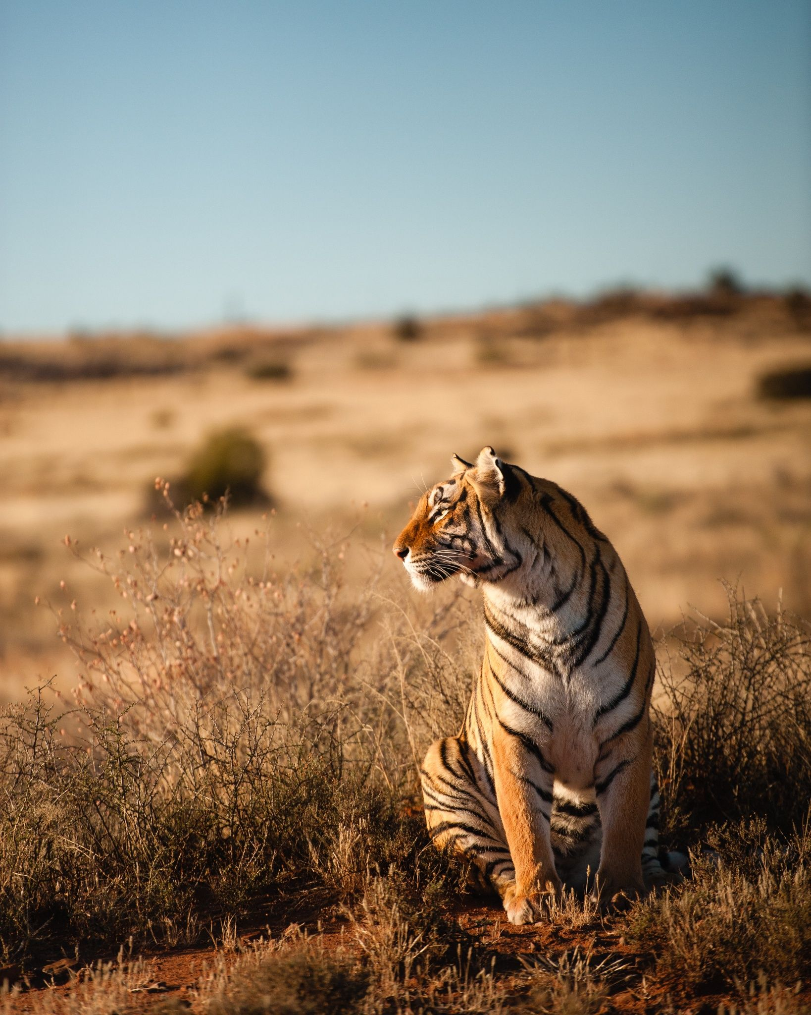 Tigerleopard 4 By Shrivant Rajgarhia On 500px