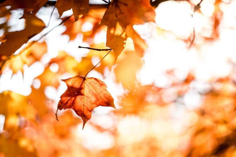 50 Fall Wallpapers To Celebrate The Season Of Change Free