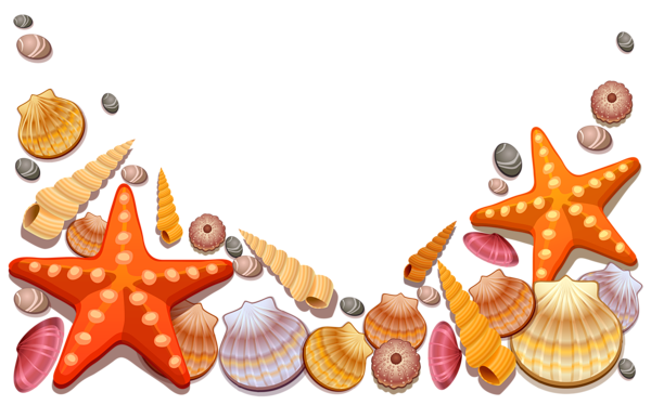 This Png Image Sea Shells Decor Png Vector Clipart Is Available For Free Download Seashell Drawing Illustration Seashell Drawing Free Clip Art