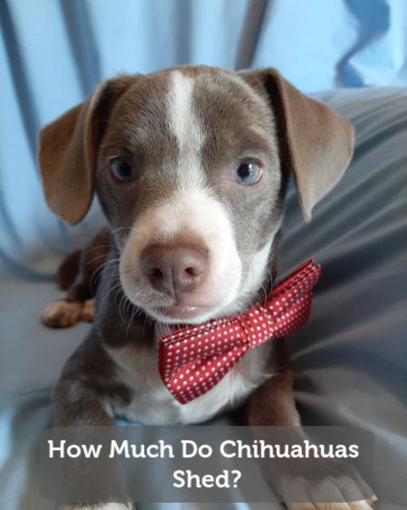 El Paso Pet Adoption Events