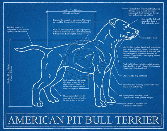Pit bull blueprint elevation pit bull art pit bull wall art pit bull blueprint elevation pit bull art pit bull wall malvernweather Images