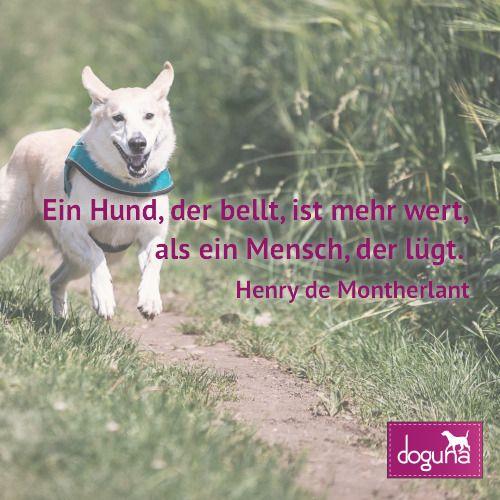 Ein Hund Der Bellt Ist Mehr Wert Als Ein Mensch Der Lugt Henry