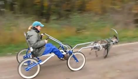 Dog Wagons And Carts Sacco Dog Cart With One Dog Dog Sledding
