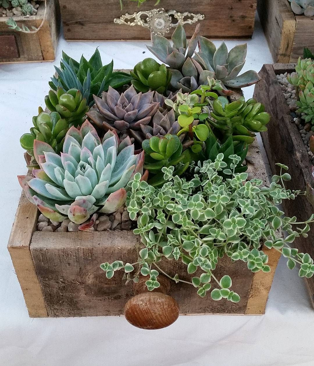 Succulent gardens in recycled timber drawers available from the ...