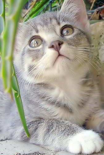 Pin By Felicity Rowe On Cats Cute Animals Cute Cats Pets