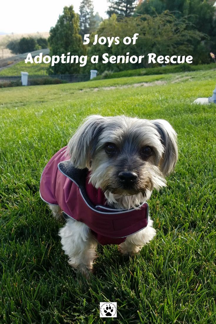 5 Joys Of Adopting A Senior Rescue Dog Senior Dogs Care Homeless Pets Rescue Dogs