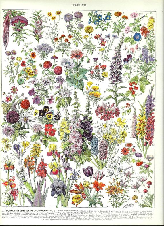 Vintage FLOWERS poster Vintage French Dictionary