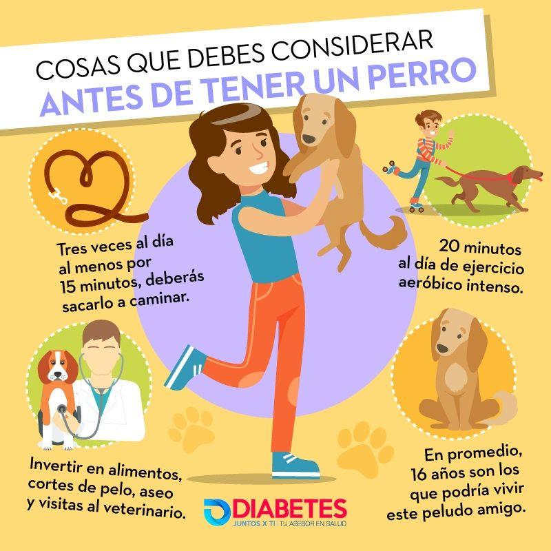 8 Cosas Que Debes Considerar Antes De Tener Un Perro Diabetes Juntos X Ti Perros Consejos Para Mascotas Perros Mascotas
