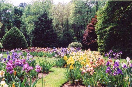 Iris S Love Garden Flowers Perennials Iris Garden Garden Design