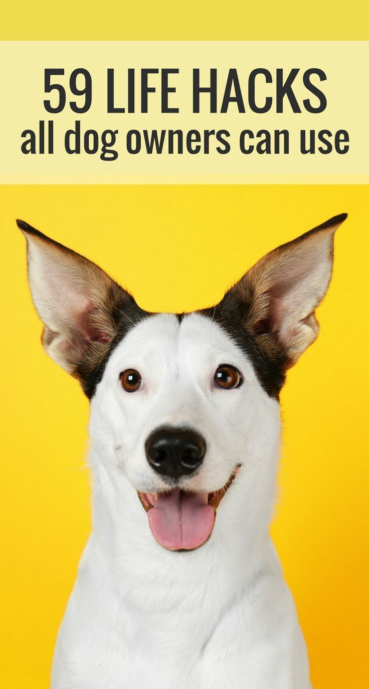 59 Simple Life Hacks For Dog Owners Easiest Dogs To Train Dog