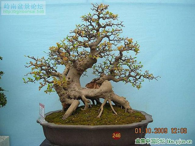 The momentum of a beautiful bonsai | Flickr - Photo Sharing!
