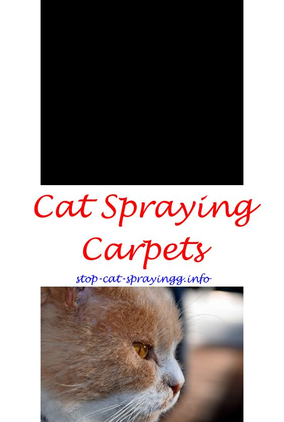 Merveilleux Cat Pee Repellent Dog Urine. My Cat Keeps Spraying How To Get Cat Urine  Smell Out Of Furniture ...