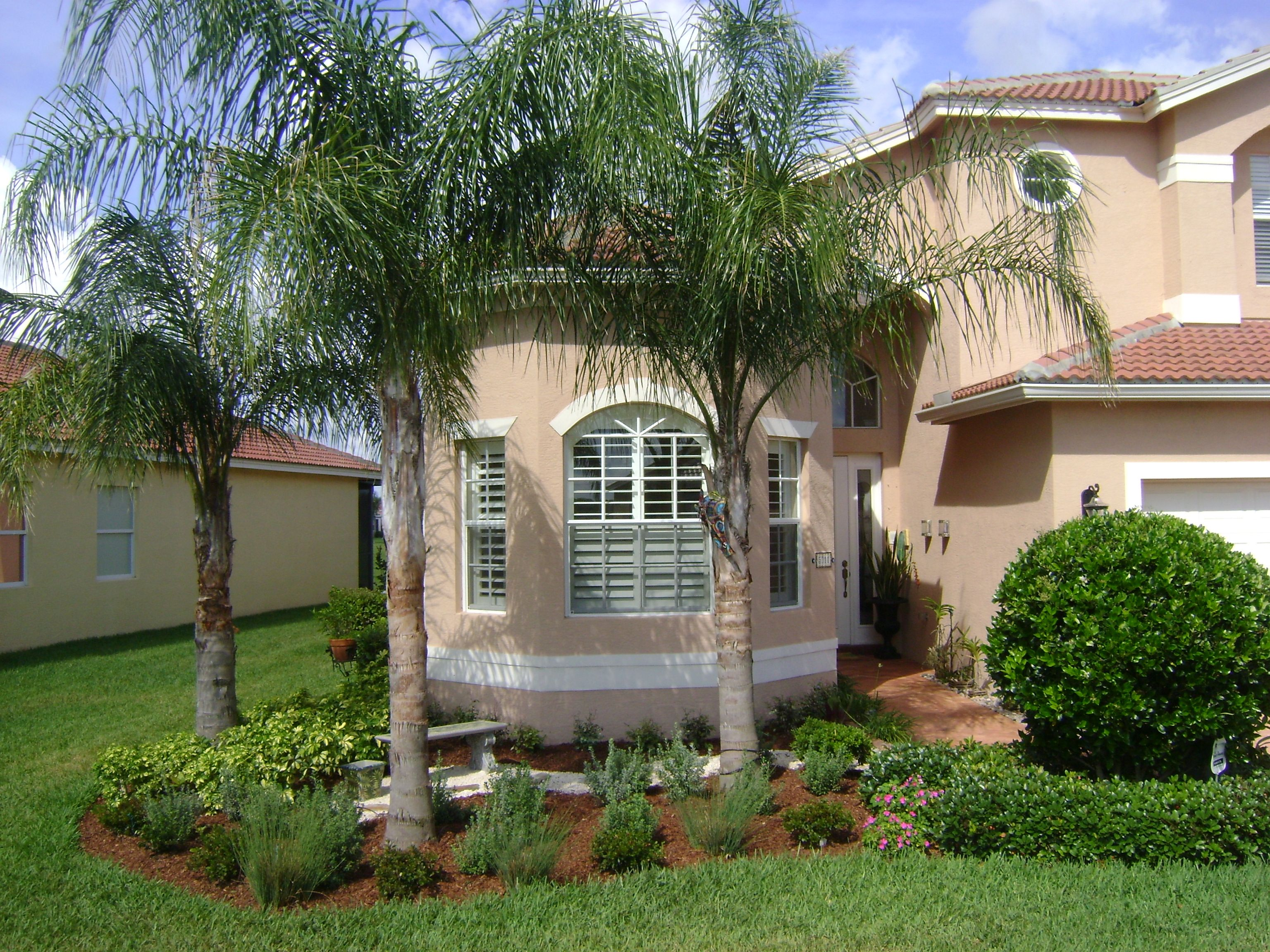 http://www.plantnurserytampa.com/wp-content/uploads/2010 ... on Backyard Landscaping Ideas With Palm Trees id=20209