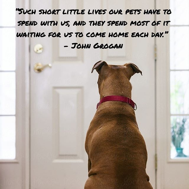 Such Short Little Lives Our Pets Have To Spend With Us And They