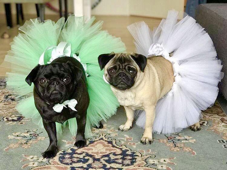 Wedding Pug Bridesmaids Https Etsy Me 2rbsulv Cute Funny