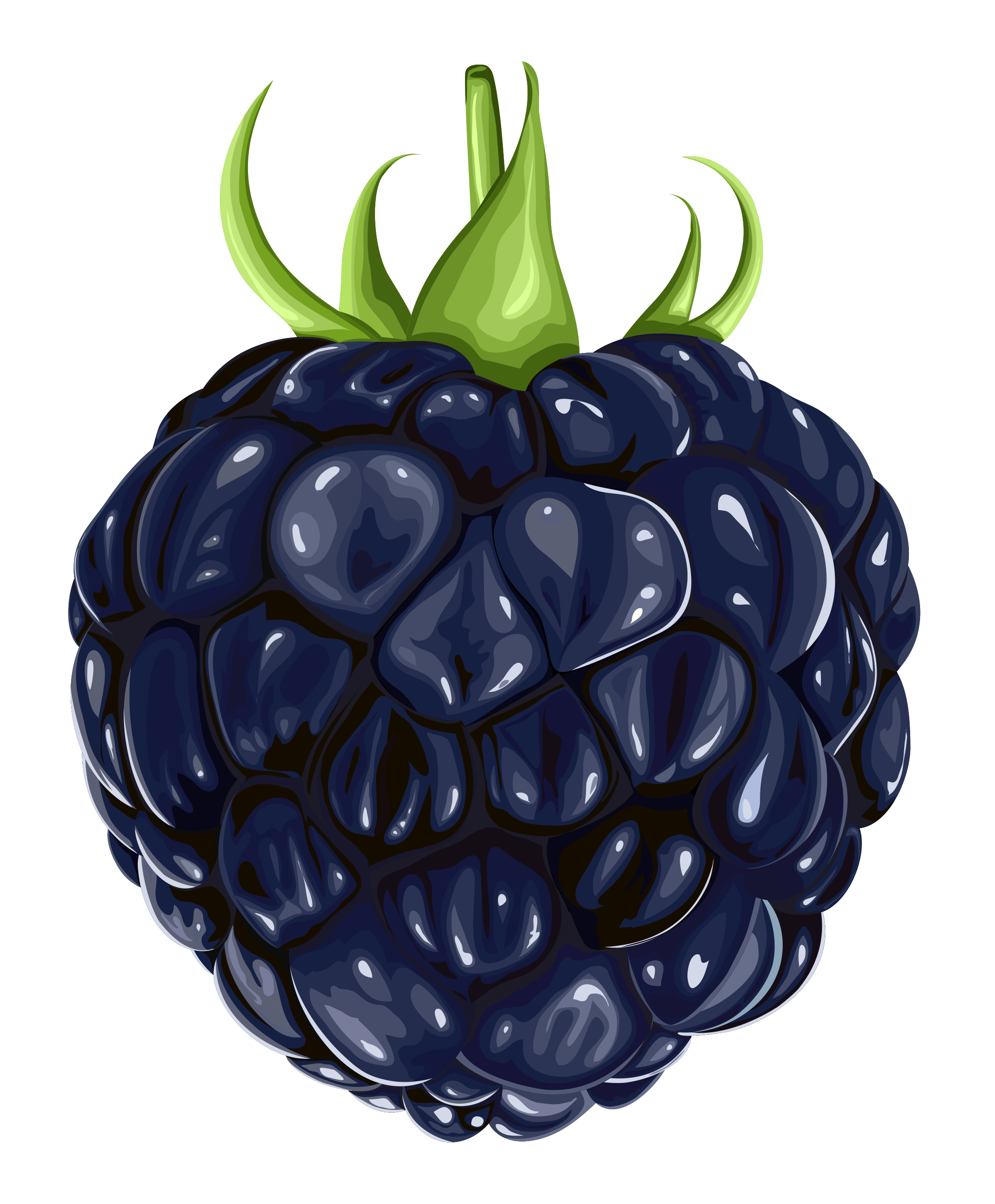 free png Blackberry Clipart images transparent