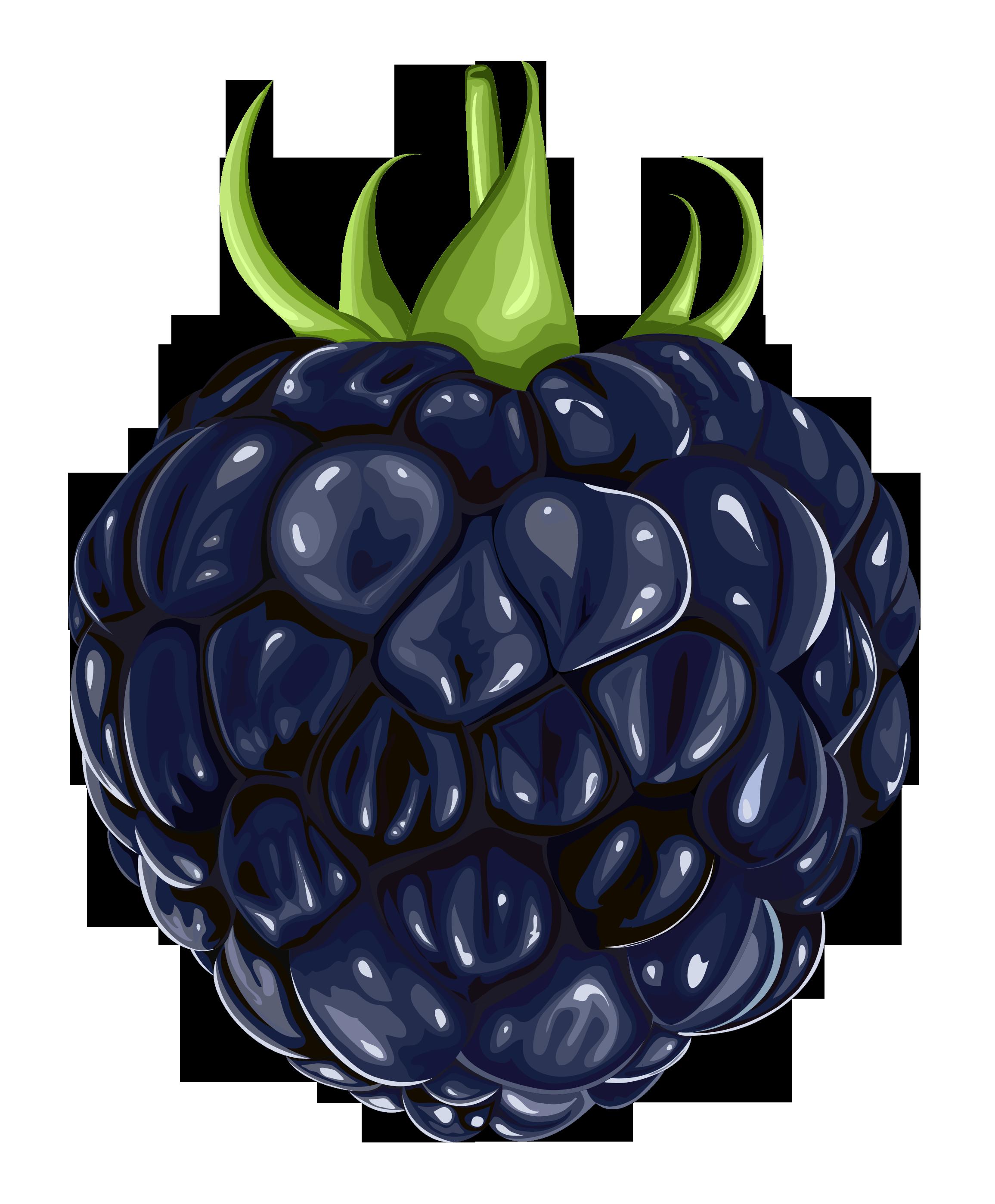 blackberry fruit clipart - photo #1
