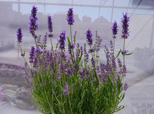 15 Best Smelling Indoor Plants For A Divinely Fragrant 400 x 300
