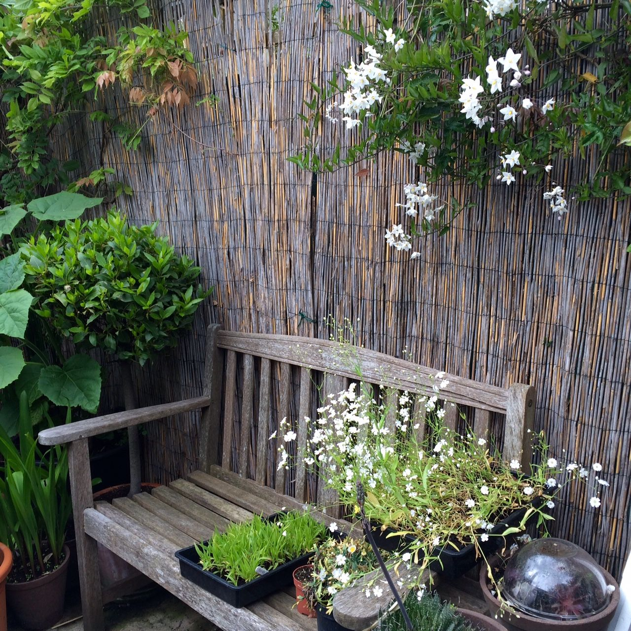 Long Narrow Garden Design Ideas: 8 Effective Tips For Narrow Town Garden Success