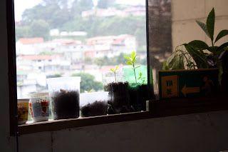 Tiempo de sembrar