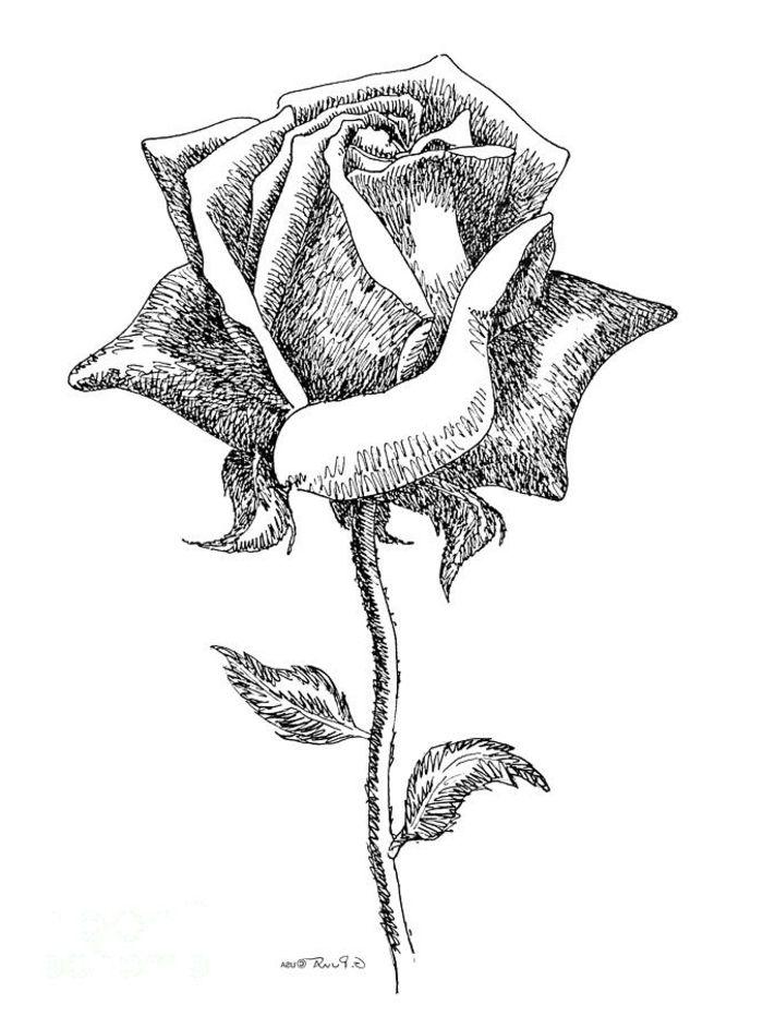 1001 photos de dessin noir et blanc qui vont vous aider am liorer votre technique - Dessin a faire sois meme ...