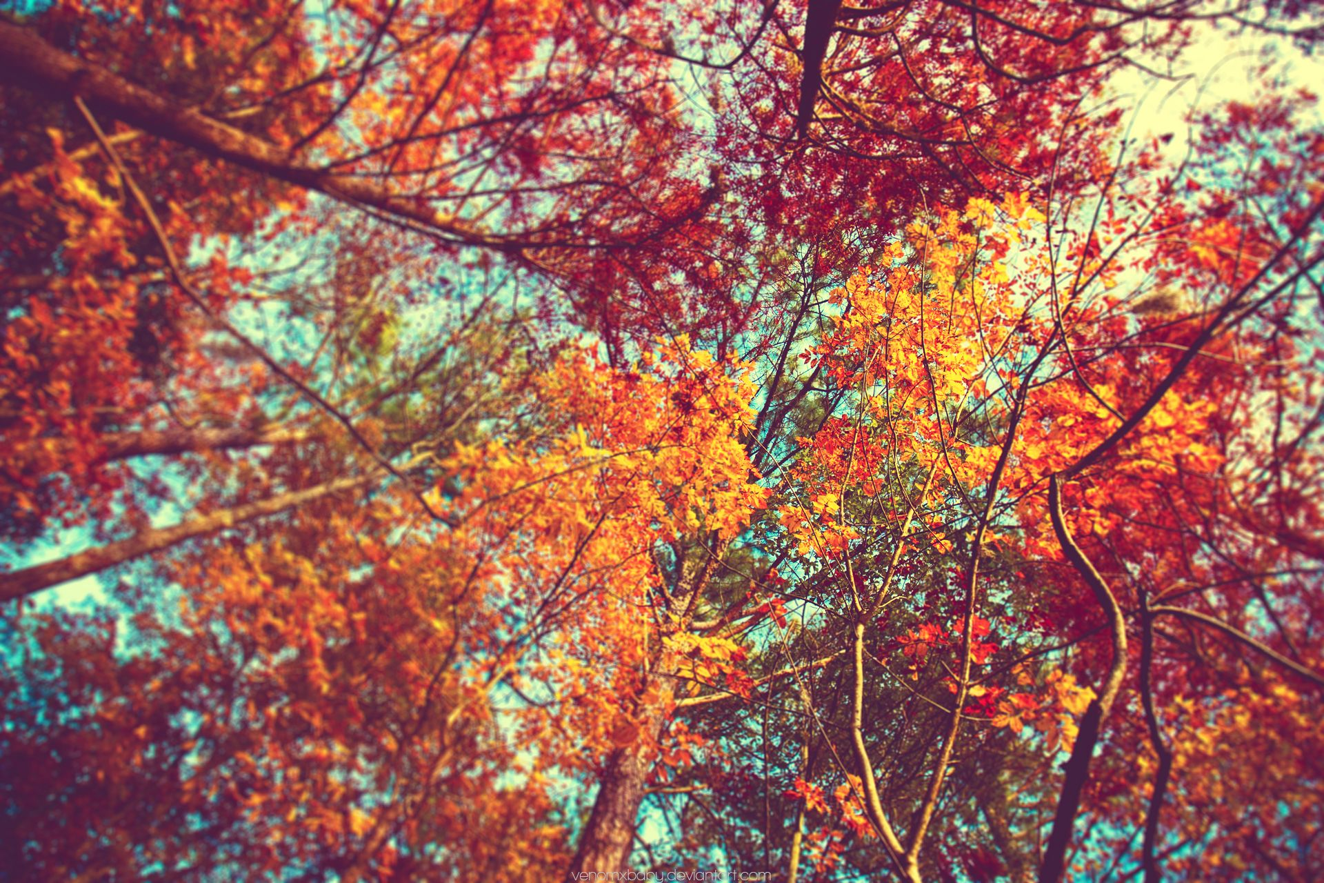 Fall Hd Wallpaper For Pc