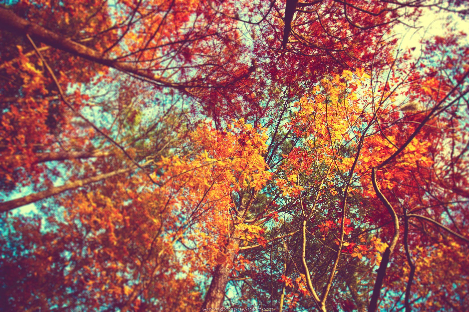Zendha Aesthetic Autumn Desktop Wallpaper