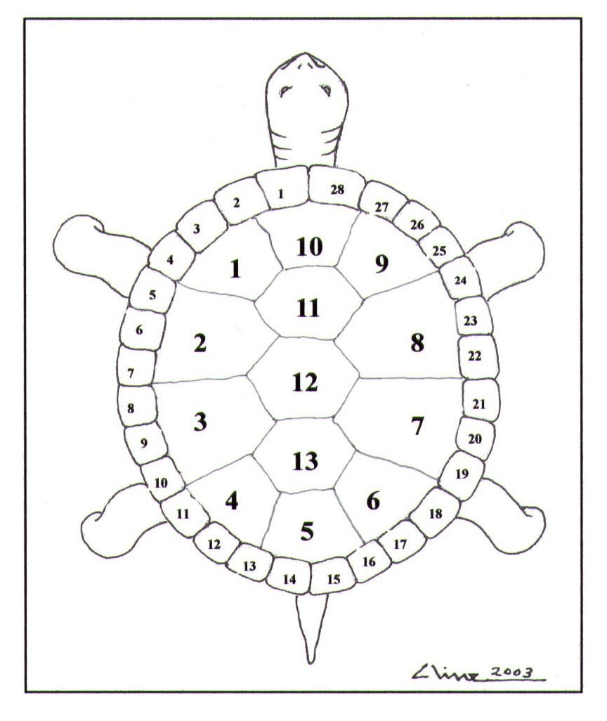 Native american name for turtle thirteen moons on a turtles native american name for turtle thirteen moons on a turtles back biocorpaavc Choice Image