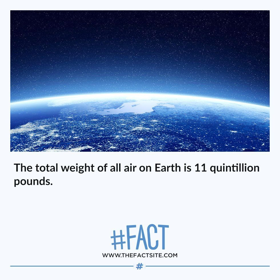 555 Fun Random Fact Images True Facts Funny Facts Facts