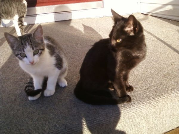 Kittens For Free Bolivar Mo Kittens Pets Cats