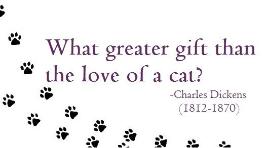 #Cats #Love #Gift #Quotes #TICA