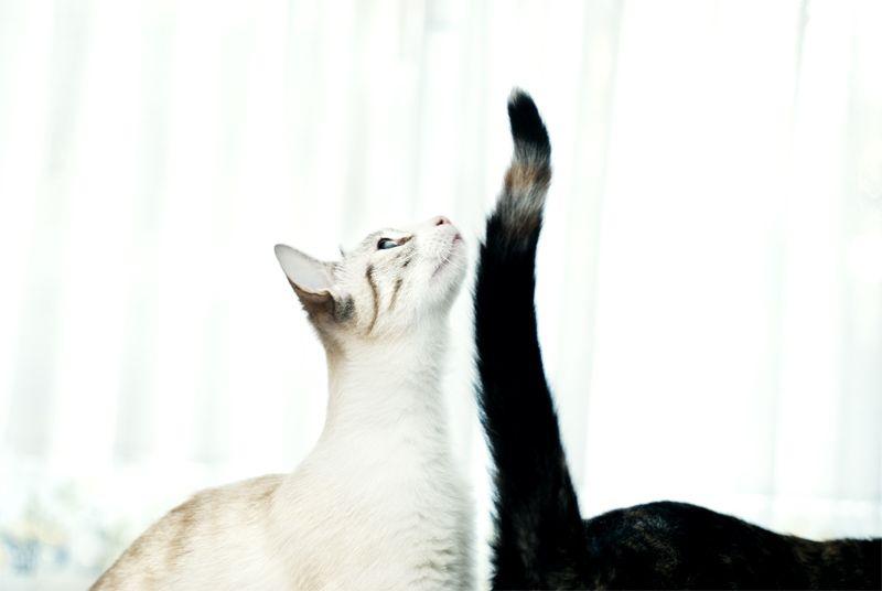 Ibai Acevedo » Pictures » White balance