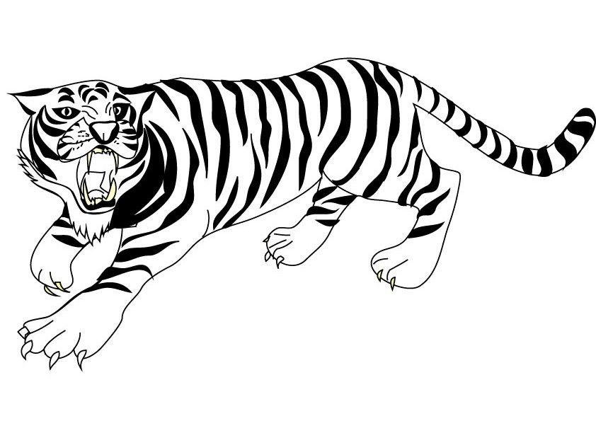tiger coloring pages - Google-haku | Viidakko | Pinterest | Tigers