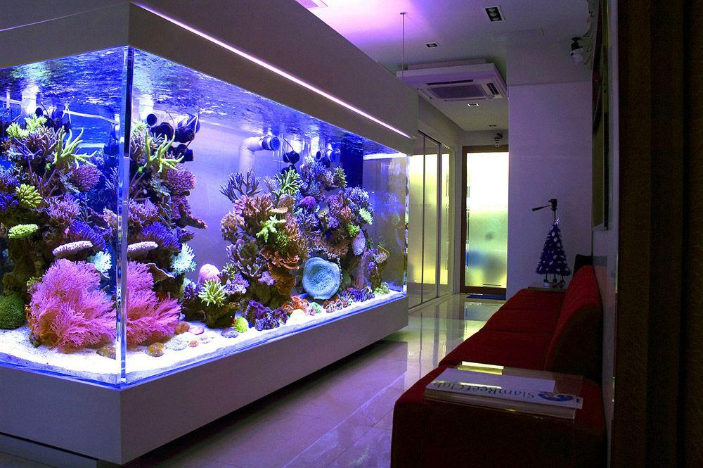 Chingchai-Reef-Aquariumjpg 1,000×665 pixels Tanked Pinterest