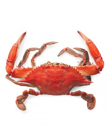 How To Eat A Blue Crab Crab Maryland Blue Crab Blue Crab