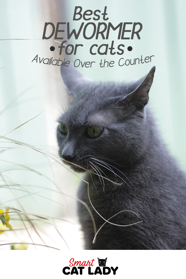 Best Dewormer for Cats Available Over the Counter (With