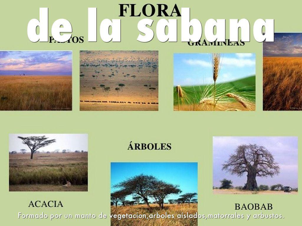 23 Ideas De Biomas Terrestres Biomas Bioma Terrestre Bioma