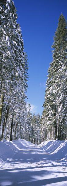 'Yosemite National Park, California, USA'