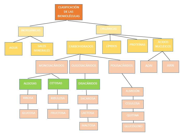 Mapa Conceptual De Biomoléculas Orgánicas Mapa Conceptual