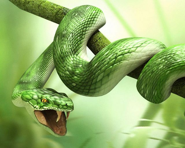 Scary Snakes and Huge Forests by sssnake (With images