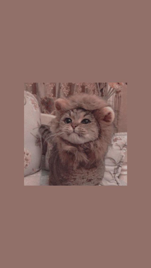Обои для телефона с котиком 😻 ️ (с изображениями)   Милые ...