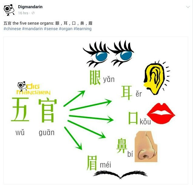 Chinese Lessons, Chinese