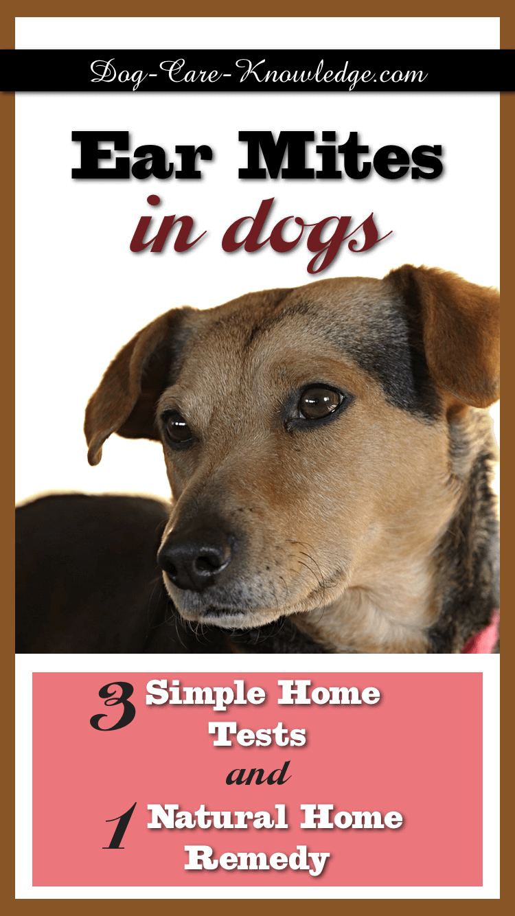 Ear Mites In Dogs? Big Problems - Guaranteed Solution! | Dog