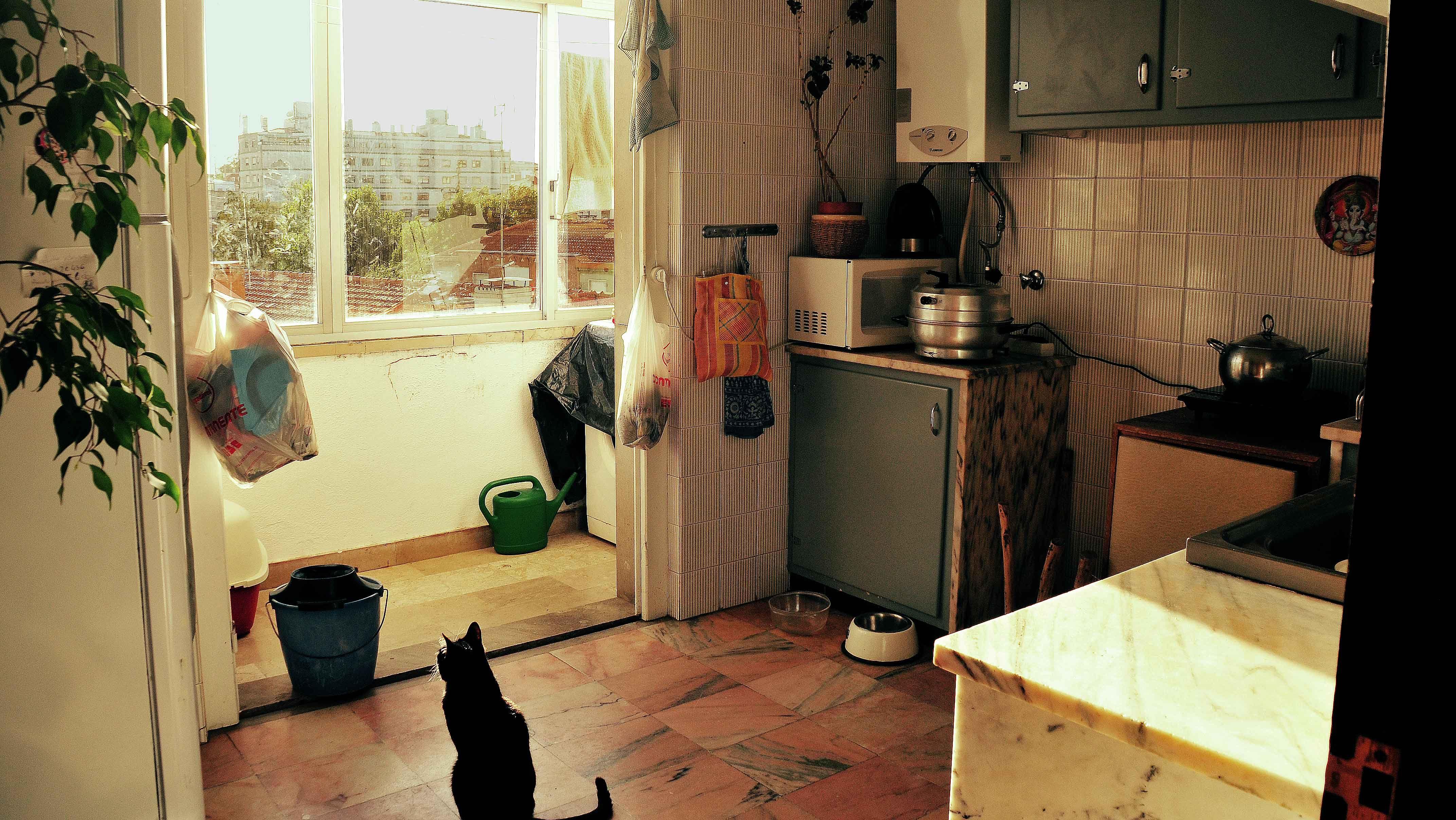 Cat Zizi always