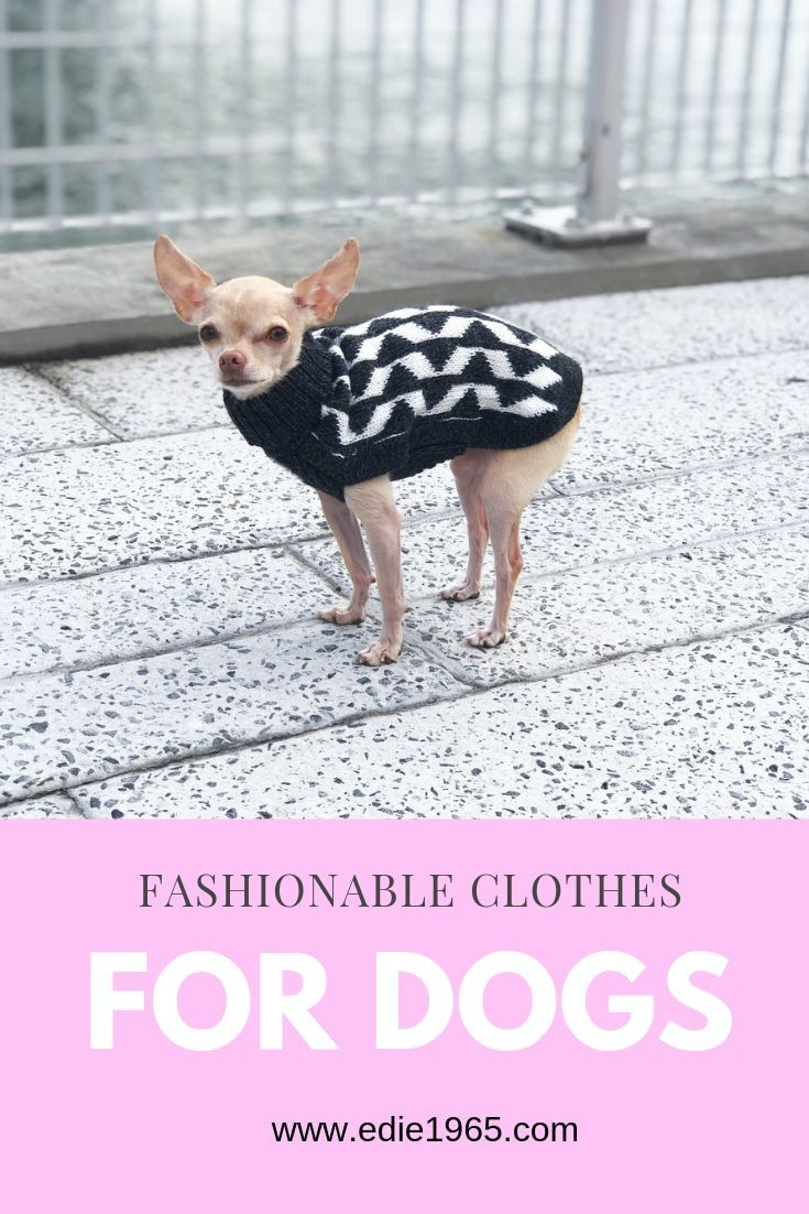 Grey Shadow Dog Sweater is part of Amazon Com Gray Dog Sweater - Luxury Dog Clothing   Designer dog clothing  This small dog sweater will keep your dog warm and fashionable  Chihuahua sweater  XXS dog clothing  Dog Coats, dog sweaters, luxury dog accessories