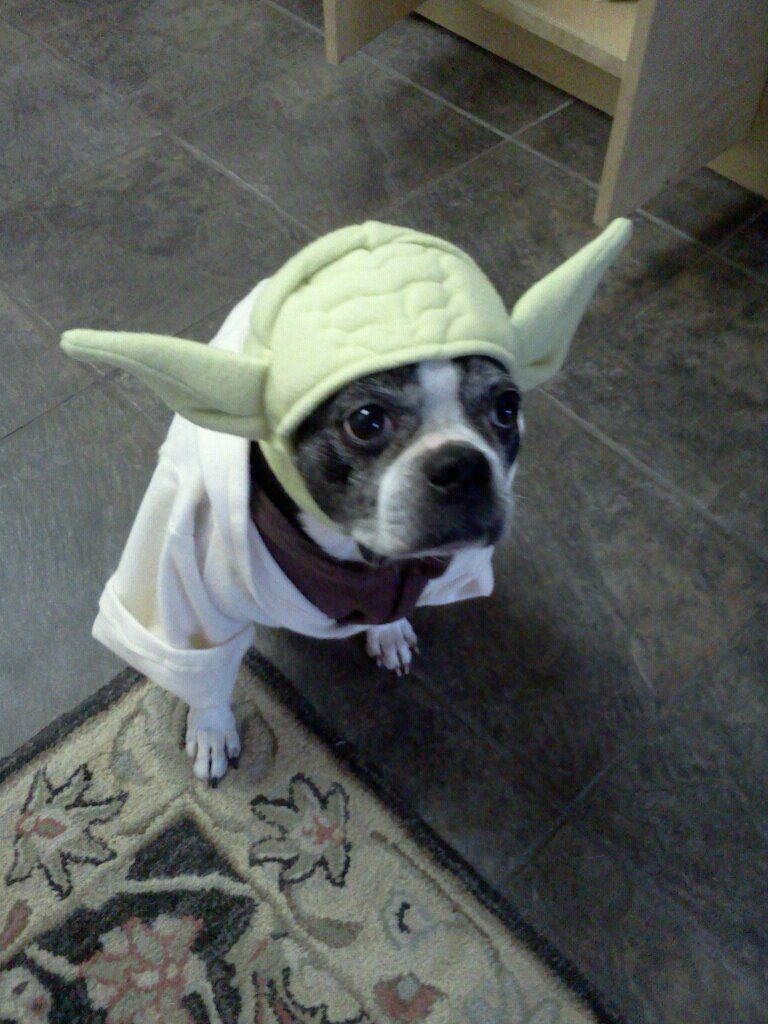 Buster's Yoda costume