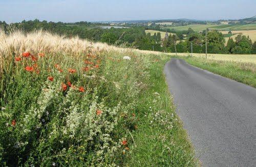 sur la route de Coulonges les Sablons - Orne